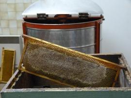 Honey frame , uncapped